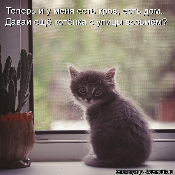 Котоматрица: Давай ещё котёнка с улицы возьмём? Теперь и у меня есть кров, есть дом..