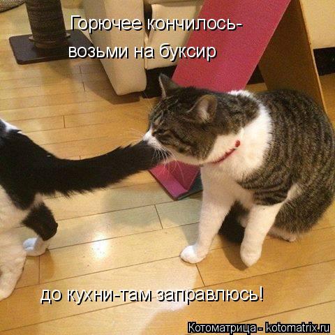 Котоматрица: Горючее кончилось- возьми на буксир до кухни-там заправлюсь!
