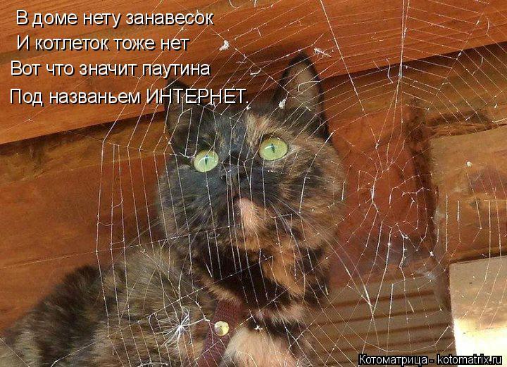 Котоматрица: В доме нету занавесок И котлеток тоже нет Вот что значит паутина Под названьем ИНТЕРНЕТ.