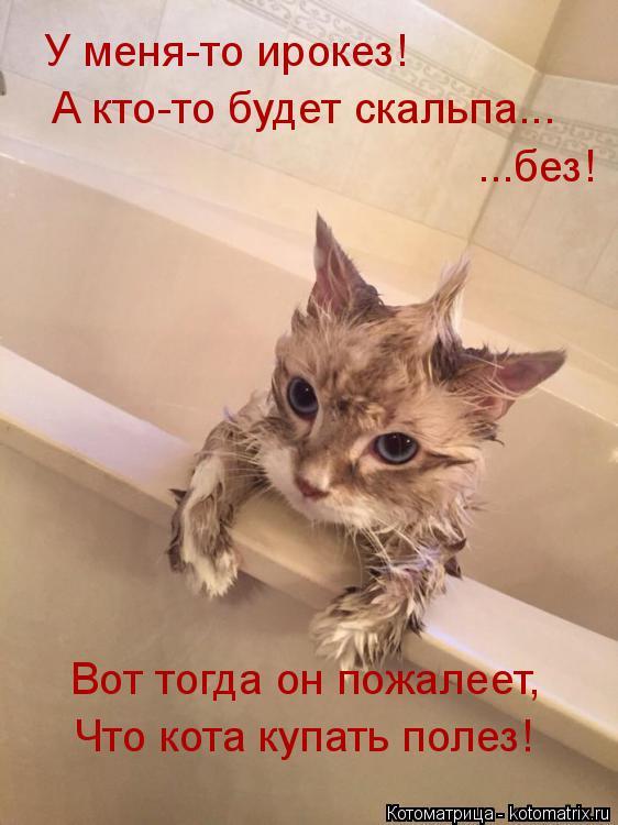 Котоматрица: У меня-то ирокез! А кто-то будет скальпа... ...без! Вот тогда он пожалеет, Что кота купать полез!