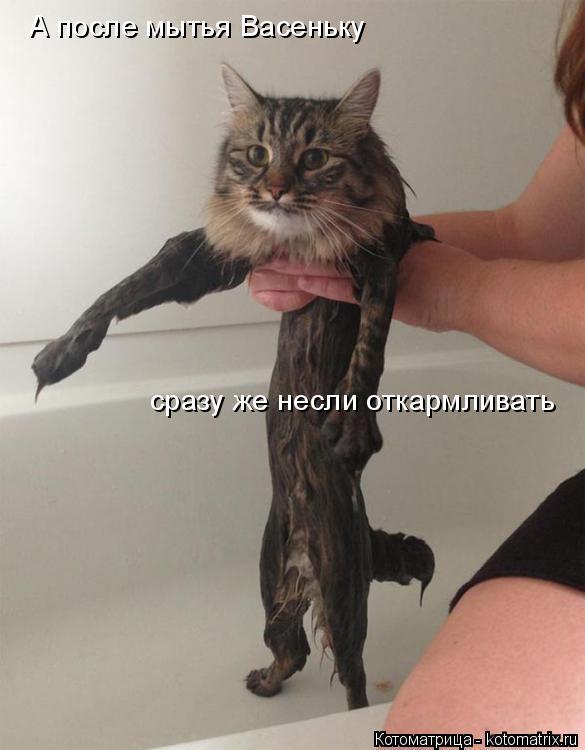 Котоматрица: А после мытья Васеньку  сразу же несли откармливать