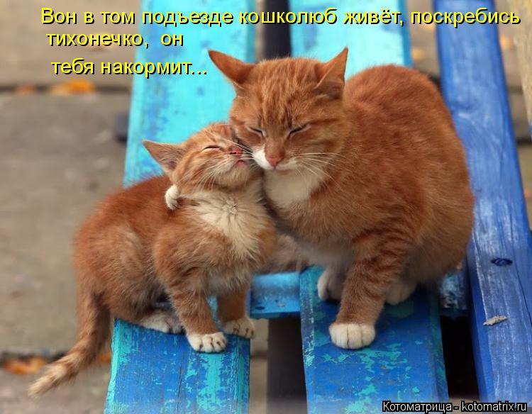 Котоматрица: Вон в том подъезде кошколюб живёт, поскребись тихонечко,  он  тебя накормит...