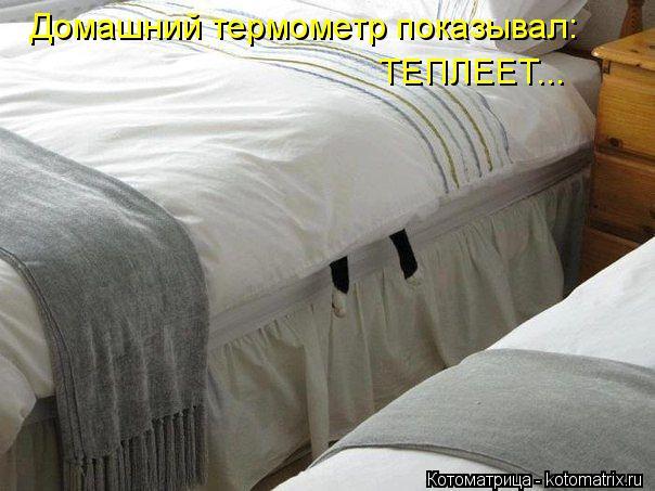 Котоматрица: Домашний термометр показывал:  ТЕПЛЕЕТ...