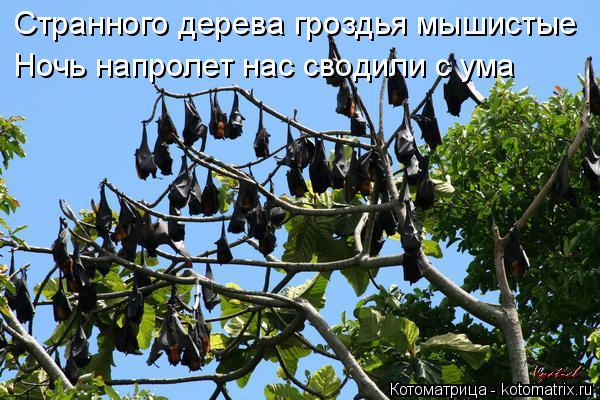 Котоматрица: Странного дерева гроздья мышистые Ночь напролет нас сводили с ума