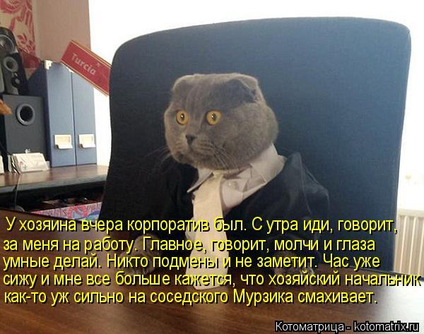 Котоматрица: У хозяина вчера корпоратив был. С утра иди, говорит, за меня на работу. Главное, говорит, молчи и глаза  умные делай. Никто подмены и не замети