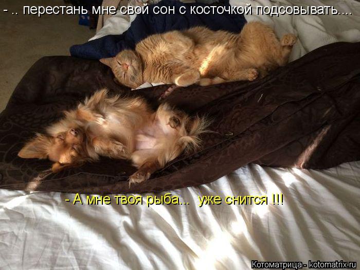 Котоматрица: - .. перестань мне свой сон с косточкой подсовывать.... - А мне твоя рыба...  уже снится !!!