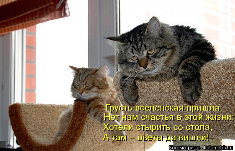 Котоматрица: Нет нам счастья в этой жизни: Грусть вселенская пришла, Хотели стырить со стола, А там – цветы да вишни!