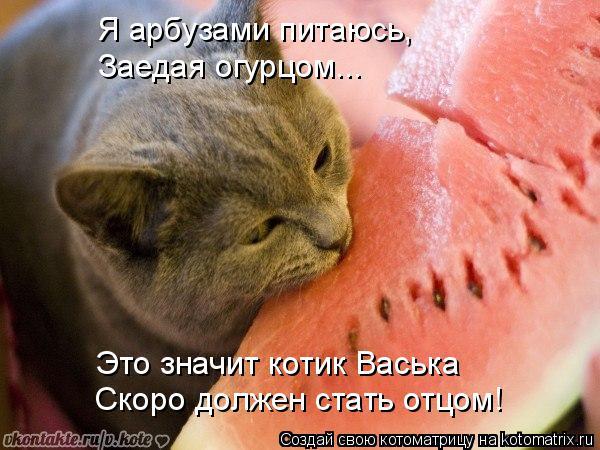 Котоматрица: Я арбузами питаюсь, Скоро должен стать отцом! Это значит котик Васька Заедая огурцом...