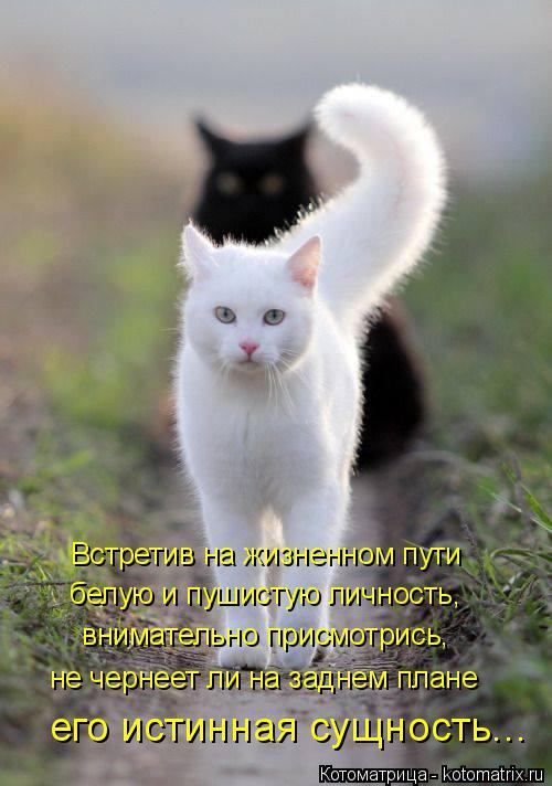 Котоматрица: Встретив на жизненном пути белую и пушистую личность,  внимательно присмотрись, не чернеет ли на заднем плане его истинная сущность...