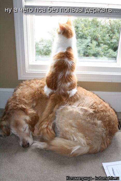 Котоматрица: ну а чего пса без пользы держать....
