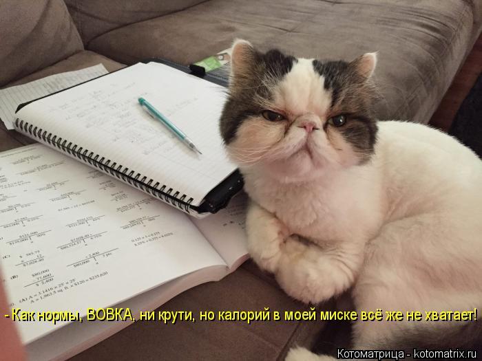 Котоматрица: - Как нормы, ВОВКА, ни крути, но калорий в моей миске всё же не хватает!