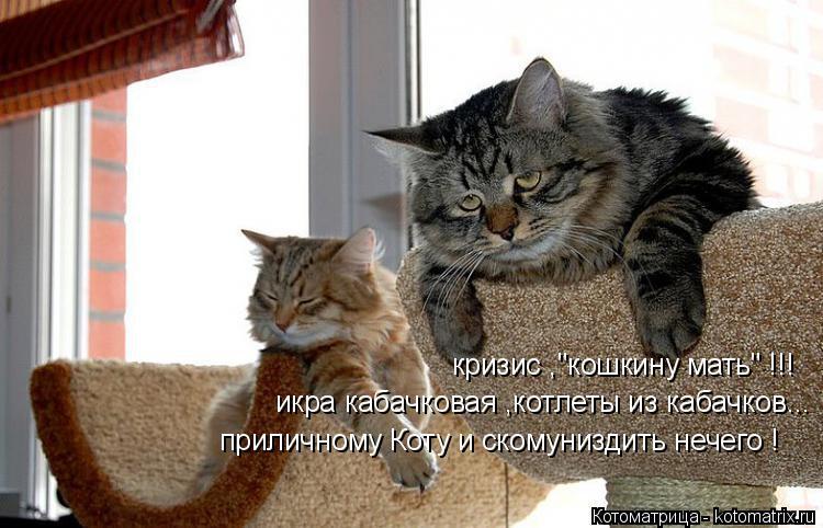 """Котоматрица: кризис ,""""кошкину мать"""" !!! икра кабачковая ,котлеты из кабачков... приличному Коту и скомуниздить нечего !"""