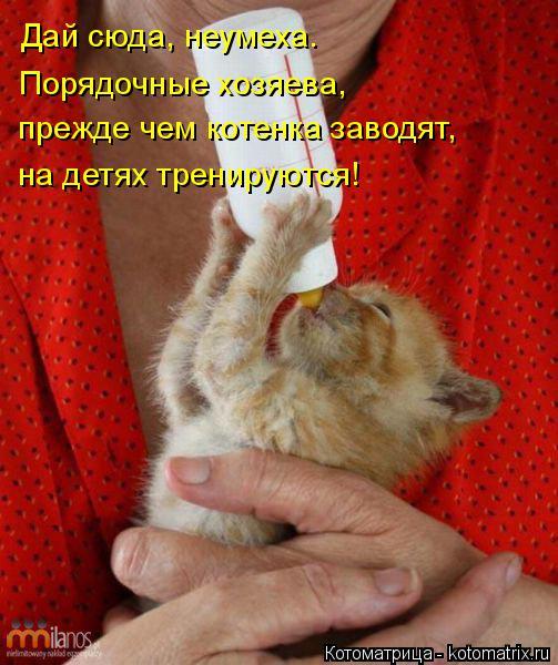 Котоматрица: Дай сюда, неумеха. Порядочные хозяева, прежде чем котенка заводят, на детях тренируются!
