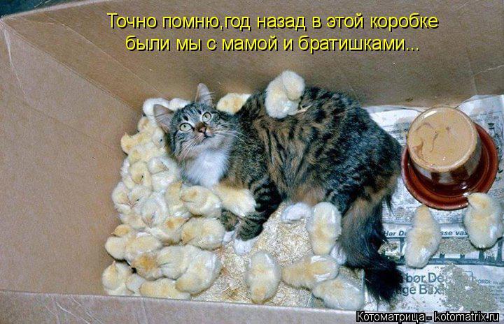 Котоматрица: Точно помню,год назад в этой коробке  были мы с мамой и братишками...