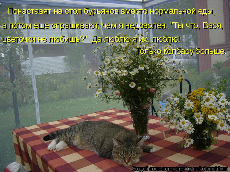 """Котоматрица: Понаставят на стол бурьянов вместо нормальной еды,  а потом еще спрашивают, чем я недоволен. """"Ты что, Вася,  цветочки не любишь?""""  Да люблю я их,"""