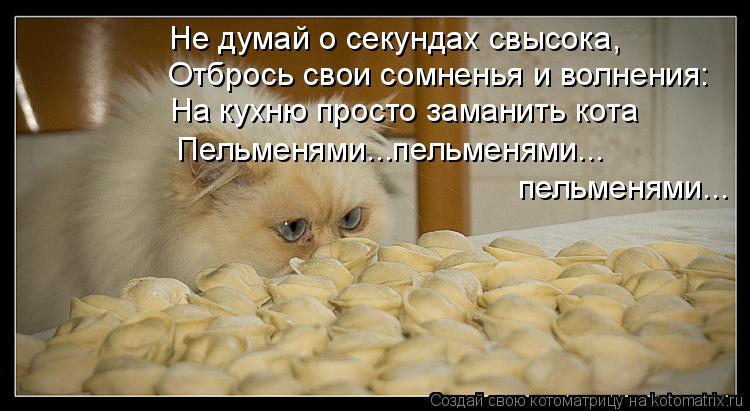 Котоматрица: Не думай о секундах свысока, Отбрось свои сомненья и волнения: На кухню просто заманить кота Пельменями...пельменями... пельменями...