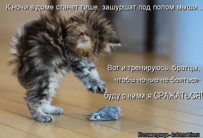 Котоматрица: К ночи в доме станет тише, зашуршат под полом мыши... чтобы ночью не бояться ---------------------------------------------------- Вот и тренируюсь, братцы,  буду с ним