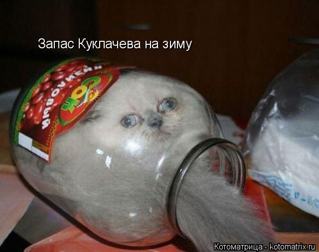 Котоматрица: Запас Куклачева на зиму