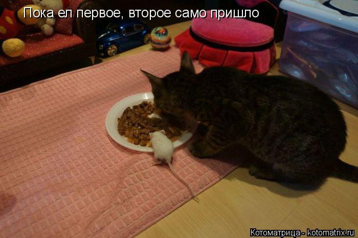 Котоматрица: Пока ел первое, второе само пришло