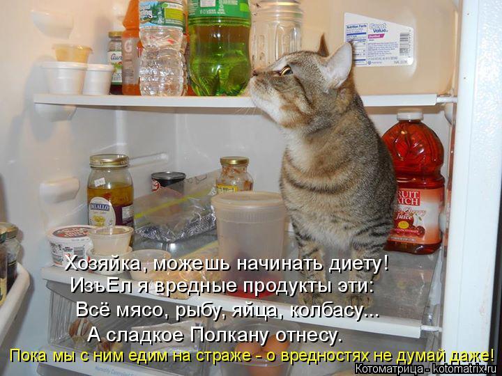 Котоматрица: Хозяйка, можешь начинать диету! ИзъЕл я вредные продукты эти: Всё мясо, рыбу, яйца, колбасу... А сладкое Полкану отнесу. Пока мы с ним едим на с