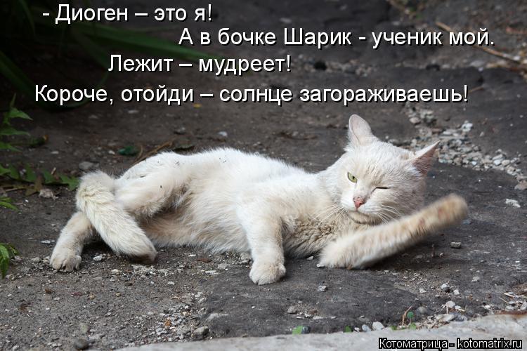 Котоматрица: - Диоген – это я!  А в бочке Шарик - ученик мой.  Лежит – мудреет! Короче, отойди – солнце загораживаешь!