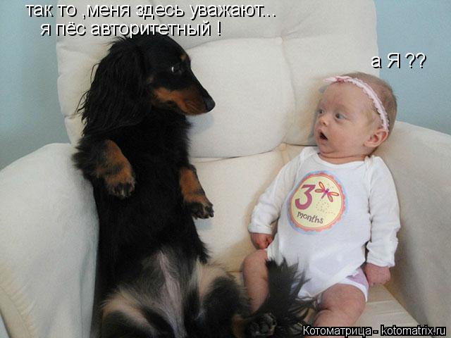 Котоматрица: так то ,меня здесь уважают... я пёс авторитетный ! а Я ??