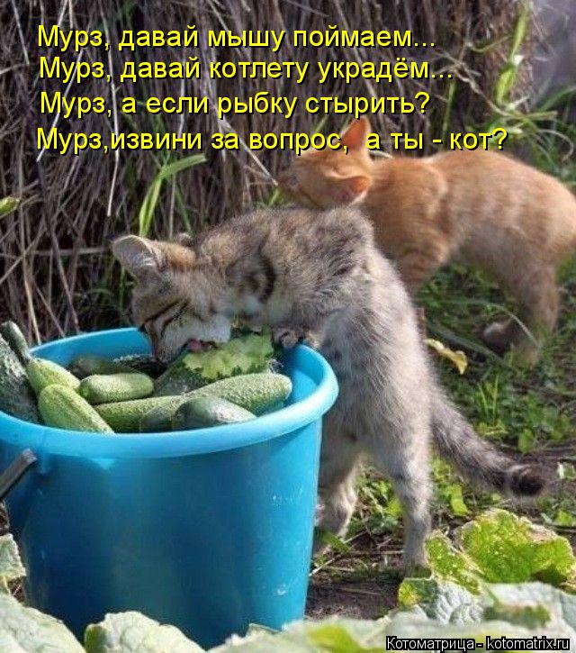 Котоматрица: Мурз, давай мышу поймаем...  Мурз, давай котлету украдём... Мурз, а если рыбку стырить? Мурз,извини за вопрос,  а ты - кот?