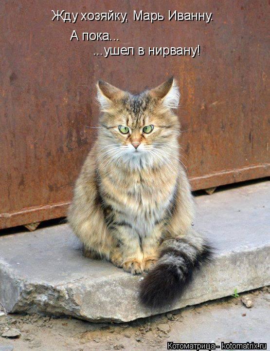 Котоматрица: Жду хозяйку, Марь Иванну. А пока... ...ушел в нирвану!