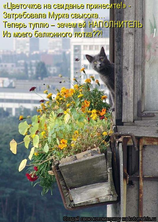Котоматрица: «Цветочков на свиданье принесите!» - Затребовала Мурка свысока… Теперь туплю – зачем ей НАПОЛНИТЕЛЬ Из моего балконного лотка??!