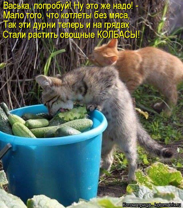 Котоматрица: Васька, попробуй! Ну это же надо! - Мало того, что котлеты без мяса, Так эти дурни теперь и на грядах Стали растить овощные КОЛБАСЫ!