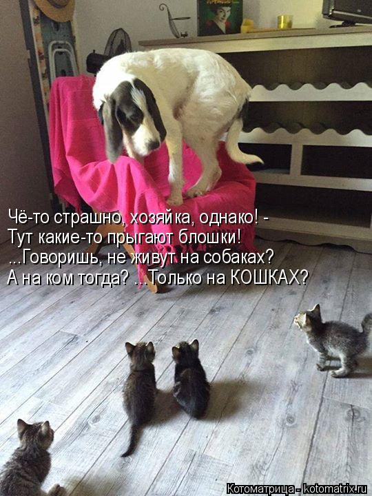 Котоматрица: Чё-то страшно, хозяйка, однако! -  Тут какие-то прыгают блошки! ...Говоришь, не живут на собаках? А на ком тогда? ...Только на КОШКАХ?