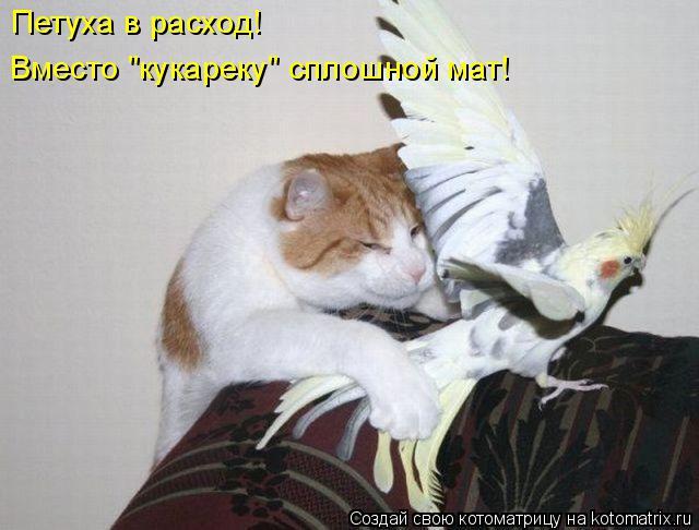 """Котоматрица: Петуха в расход! Вместо """"кукареку"""" сплошной мат!"""