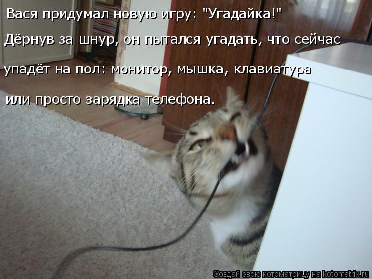 """Котоматрица: Вася придумал новую игру: """"Угадайка!"""" Дёрнув за шнур, он пытался угадать, что сейчас  или просто зарядка телефона. упадёт на пол: монитор, мышк"""