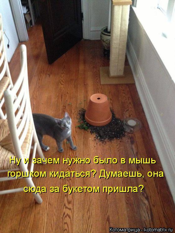 Котоматрица: Ну и зачем нужно было в мышь горшком кидаться? Думаешь, она сюда за букетом пришла?
