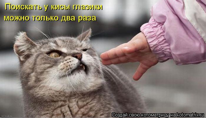 Котоматрица: Поискать у кисы глазики можно только два раза
