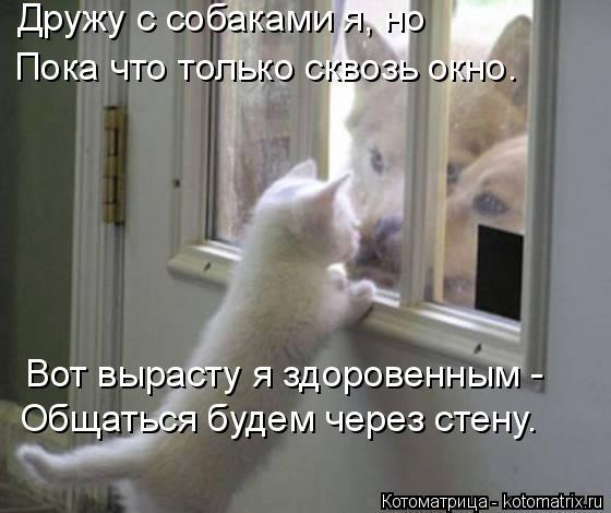 Котоматрица: Дружу с собаками я, но Пока что только сквозь окно. Вот вырасту я здоровенным - Общаться будем через стену.