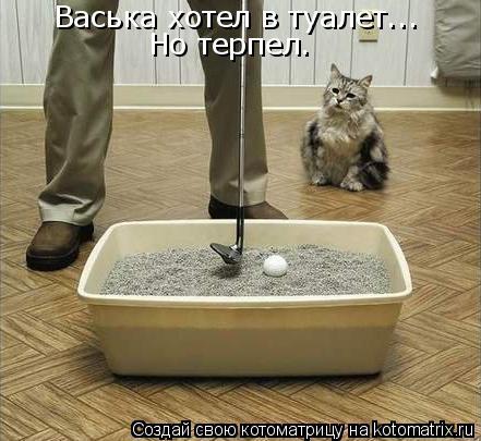 Котоматрица: Васька хотел в туалет... Но терпел.