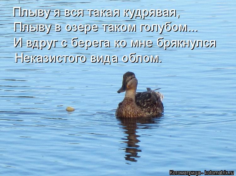 Котоматрица: Плыву я вся такая кудрявая, И вдруг с берега ко мне брякнулся Плыву в озере таком голубом... Неказистого вида облом.
