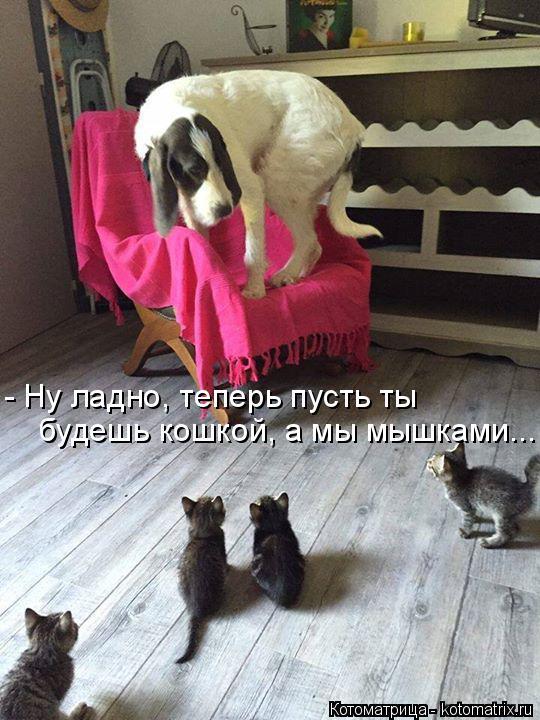 Котоматрица: будешь кошкой, а мы мышками... - Ну ладно, теперь пусть ты