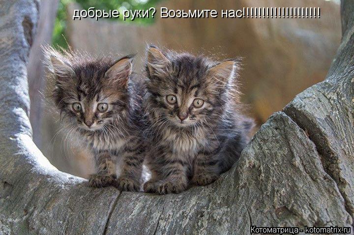 Котоматрица: добрые руки? Возьмите нас!!!!!!!!!!!!!!!!!!!!