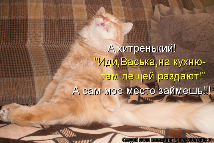 "Котоматрица: ""Иди,Васька,на кухню- там лещей раздают!"" А,хитренький! А сам мое место займешь!!!"