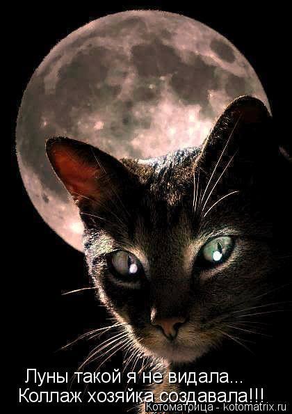 Котоматрица: Луны такой я не видала... Коллаж хозяйка создавала!!!