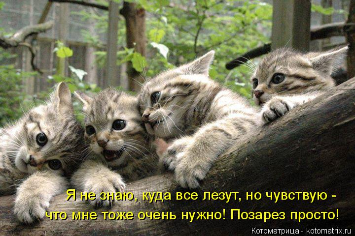 Котоматрица: Я не знаю, куда все лезут, но чувствую -  что мне тоже очень нужно! Позарез просто!