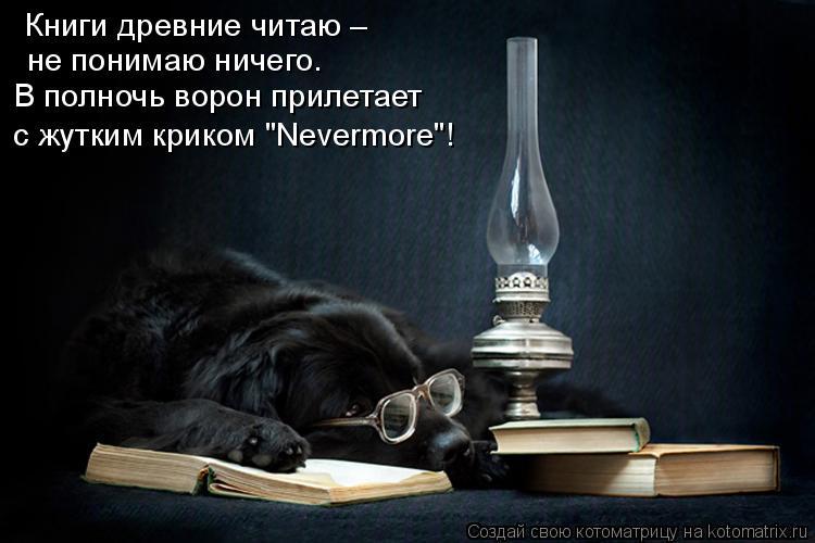 """Котоматрица: Книги древние читаю – не понимаю ничего. В полночь ворон прилетает с жутким криком """"Nevermore""""!"""