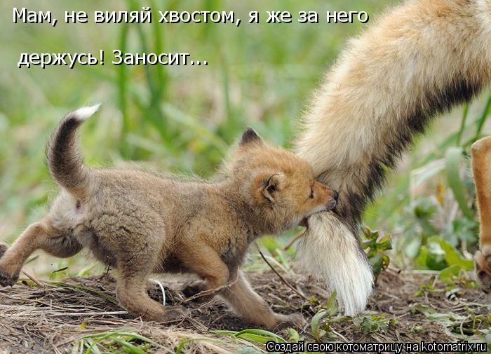 Котоматрица: Мам, не виляй хвостом, я же за него держусь! Заносит...