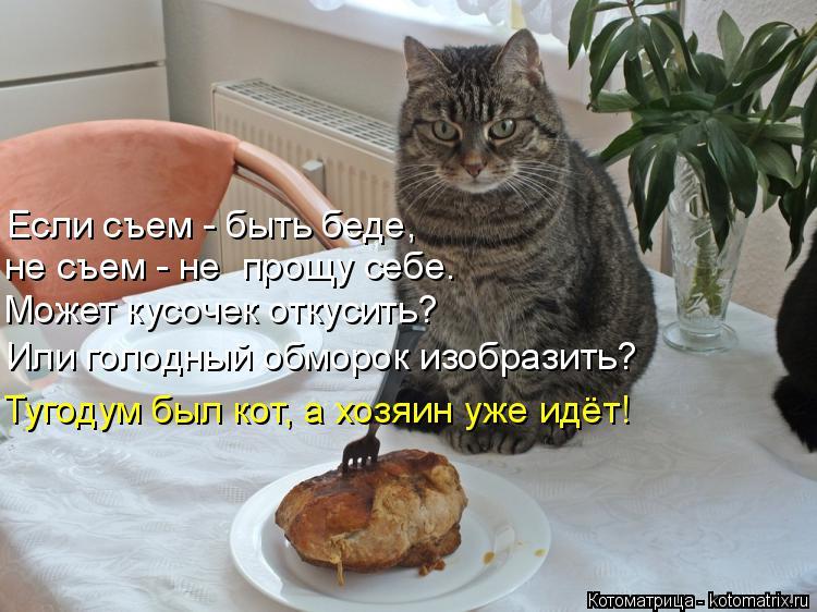 Котоматрица: Если съем - быть беде, не съем - не  прощу себе. Может кусочек откусить? Или голодный обморок изобразить? Тугодум был кот, а хозяин уже идёт!