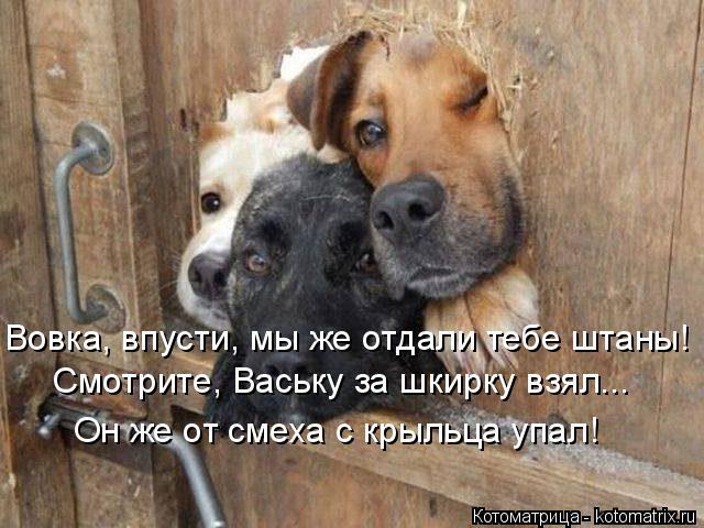 Котоматрица: Вовка, впусти, мы же отдали тебе штаны! Смотрите, Ваську за шкирку взял... Он же от смеха с крыльца упал!