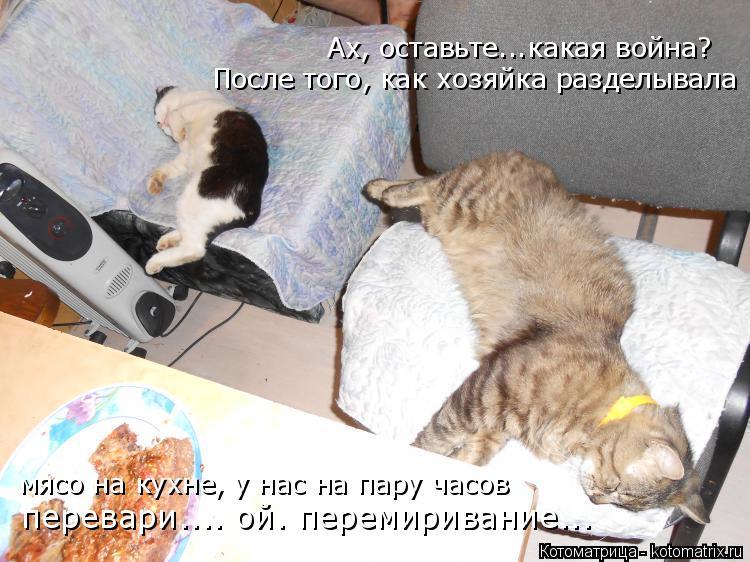 Котоматрица: Ах, оставьте...какая война? мясо на кухне, у нас на пару часов После того, как хозяйка разделывала перевари.... ой. перемиривание...