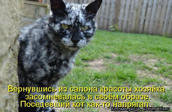 Котоматрица: Вернувшись из салона красоты хозяйка засомневалась в своём образе.  Поседевший кот как-то напрягал.