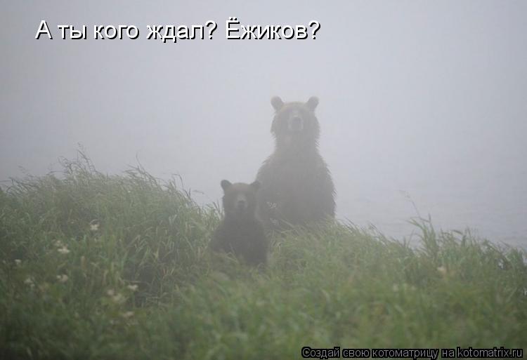 Котоматрица: А ты кого ждал? Ёжиков?